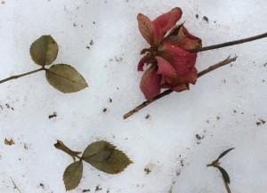"02-09-15 ""garden detritus"""