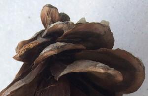 """02-20-15 """"pine cone petals"""""""