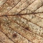 """03-08-15 """"mosaic leaf"""""""