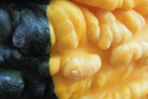 """11-08-15 """"gourdian nodules"""""""