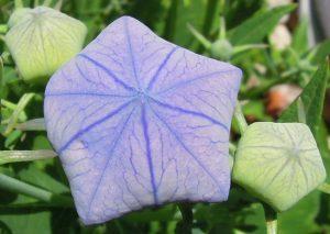 "06-19-17 ""lavender green"""